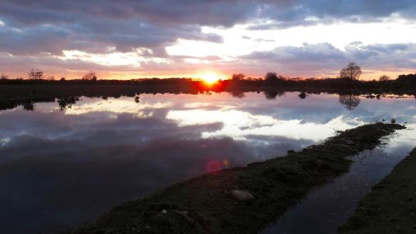 Sunset on heathland