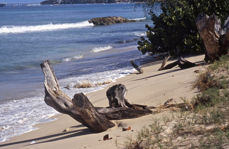 Tree trunks on beach 1