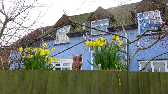 Daffodils and owl