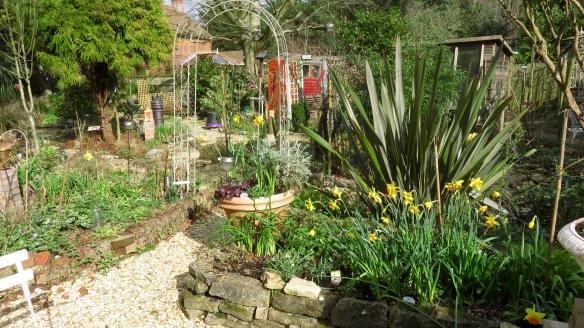 Daffodils, camellias, etc