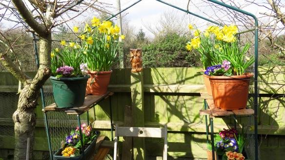 Daffodils, primulas and owl
