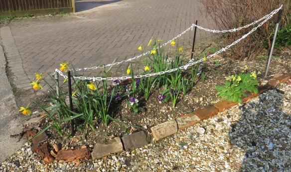 daffodils, pansies, primroses
