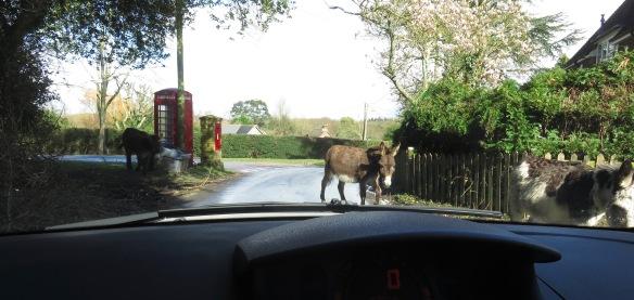 Donkeys 3