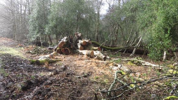 Fallen tree 5