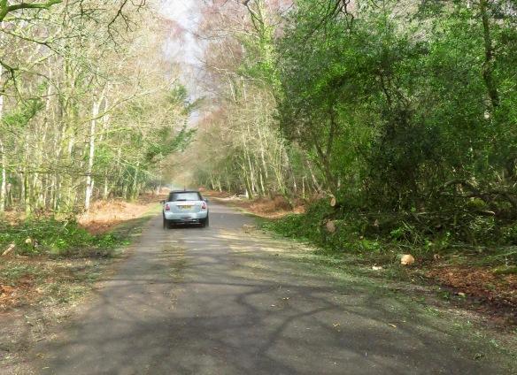 Fallen tree clearance