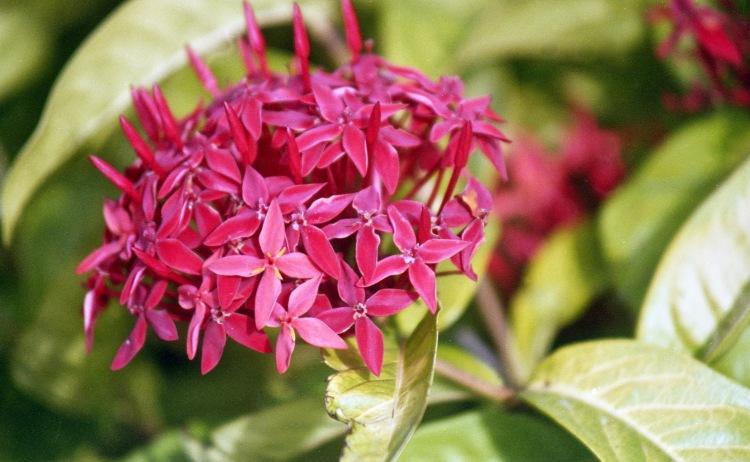 Flower unknown 1