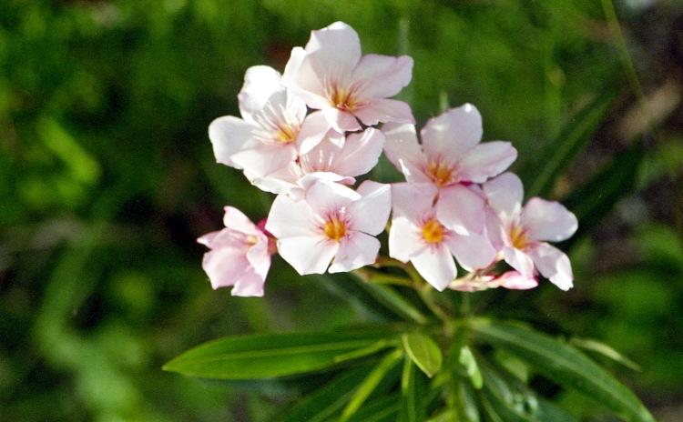 Flower unknown 2
