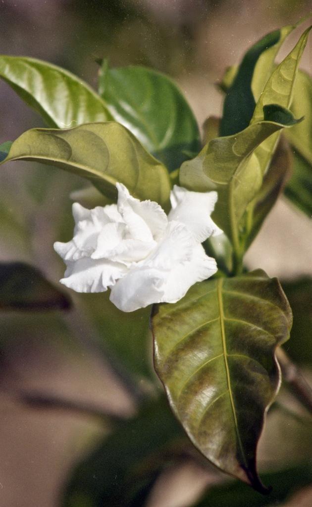 Flower unknown 3