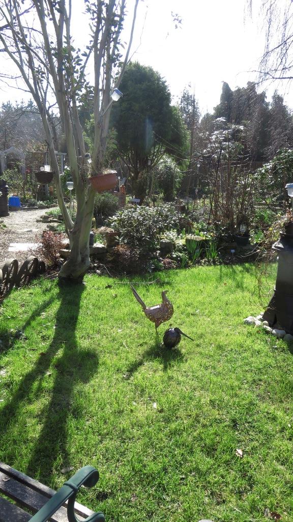 Kiwi and pheasant