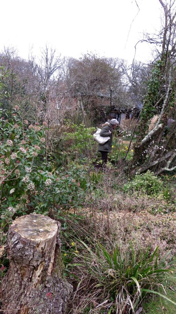 Pilley Cottage Garden 7