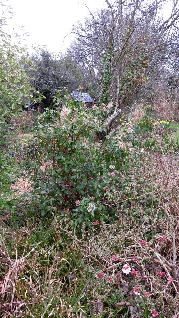 Pilley Cottage Garden 8