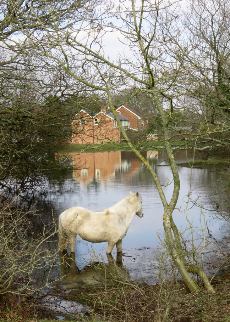 Pony in water