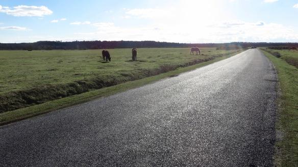 Road across moor