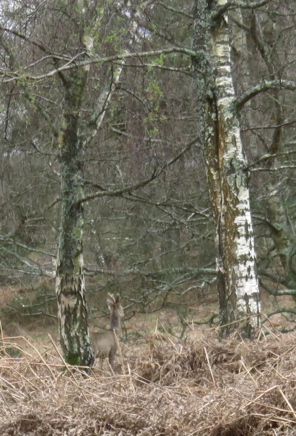 Deer in forest – Version 2