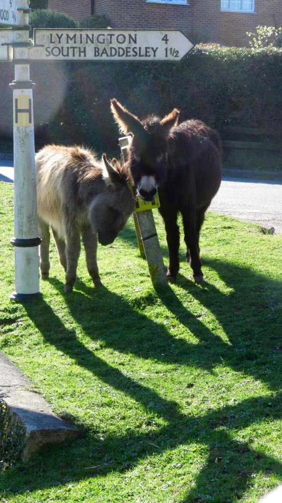 Donkeys 2