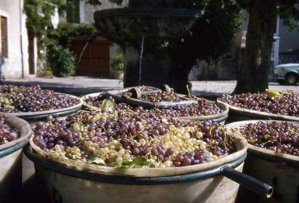 Grapes and fountain 10.81