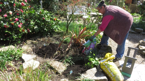 Jackie mulching palm bed 1