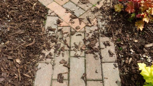 Landscape bark scattered