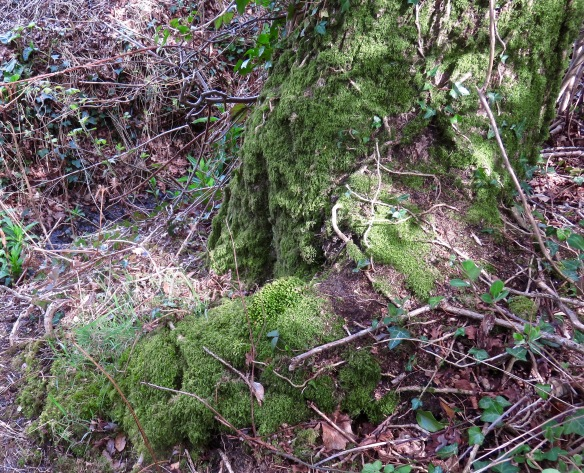 Moss-covered trunk