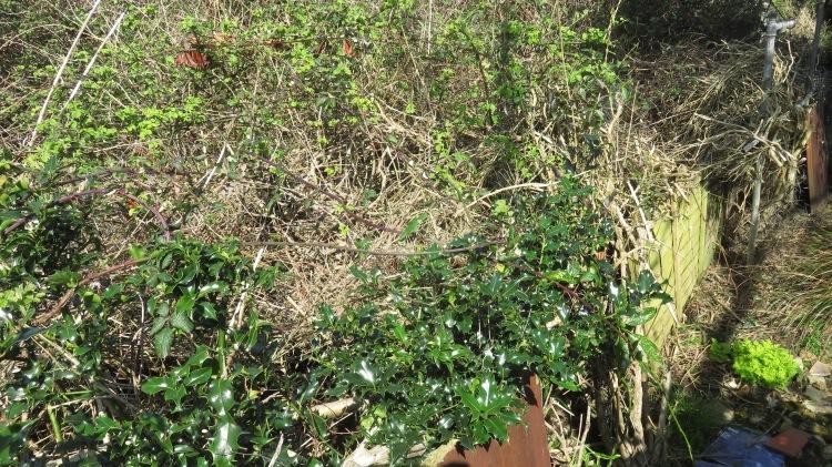 North Breeze garden 6