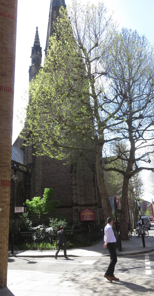 Plane trees and St Stephen's Church