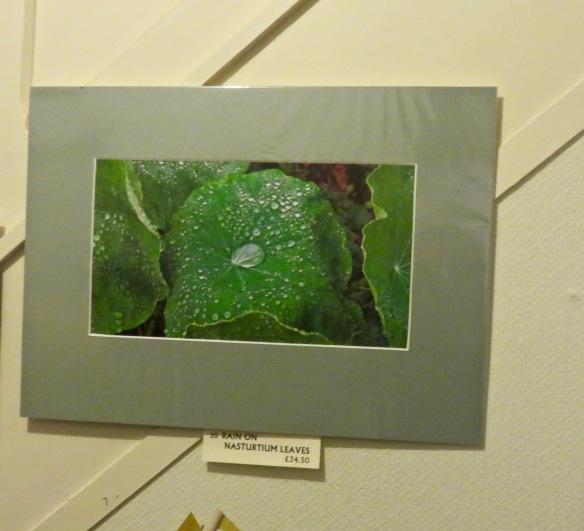 Rain on Nasturtium leaves print