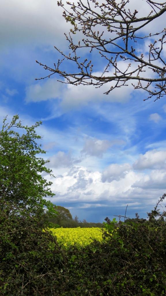 Sky over rape field