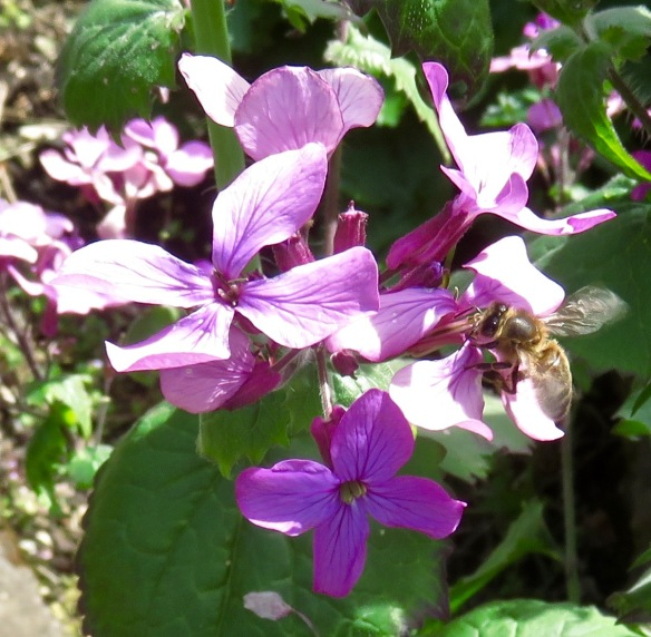 Bee and honesty