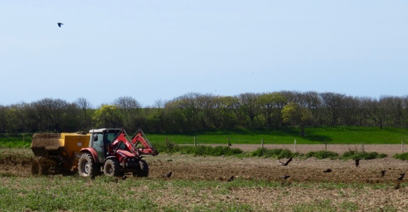 Crows and crop fertilising