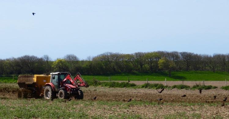Crows and crop fertilising
