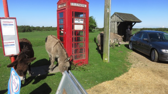 Donkeys, bus stop, phone box