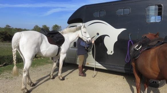 Horse, Fynn amd mare 1