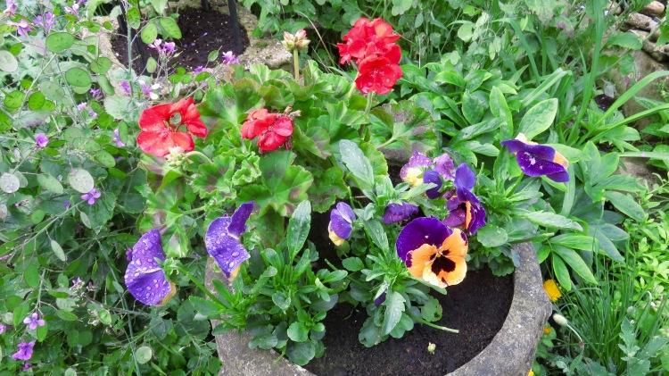 Pansies, petunias, and honesty