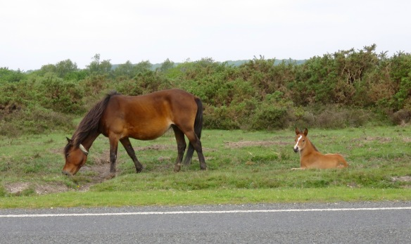 Pony and foal 2