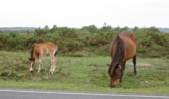Pony and foal 3