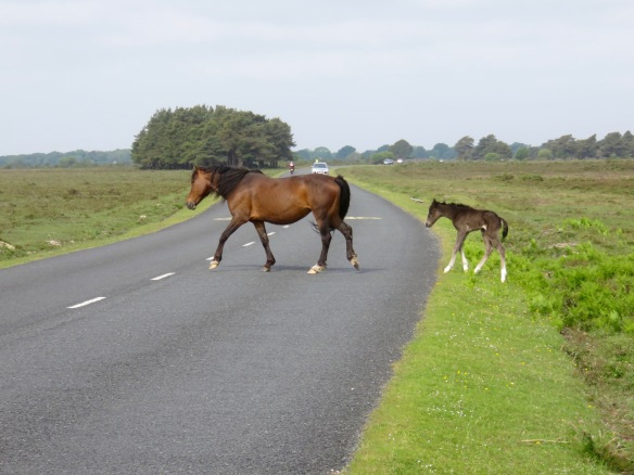Pony and foal crossing road 1