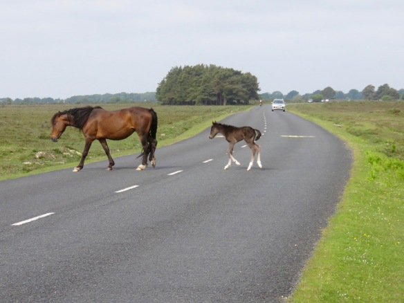 Pony and foal crossing road 2