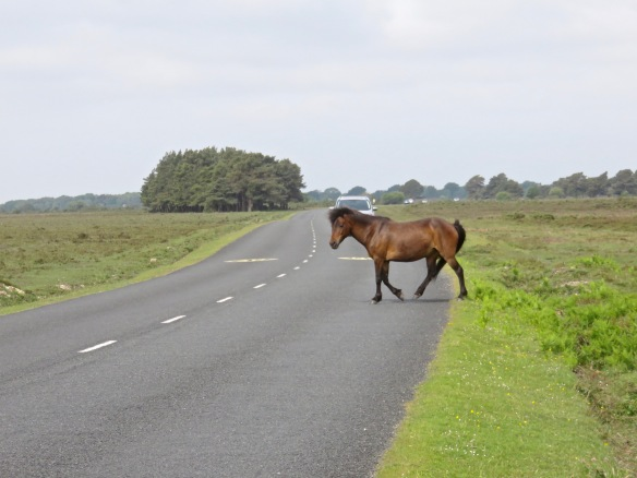 Pony crossing road