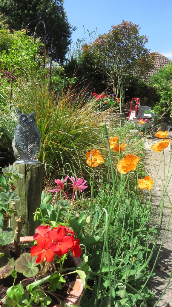 Poppies etc