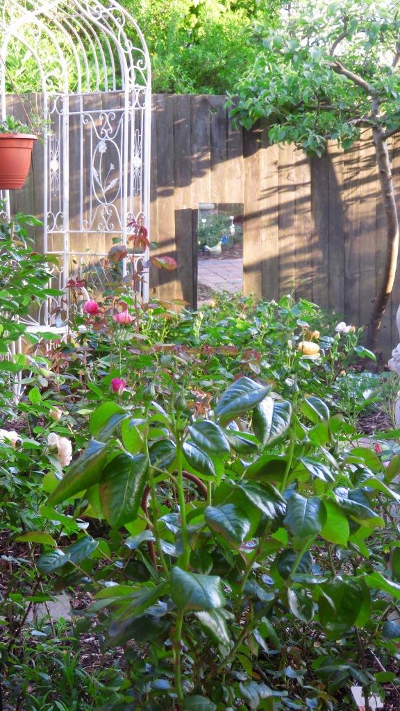 Rose garden evening