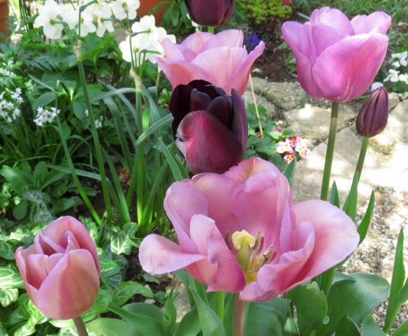 Tulip mix