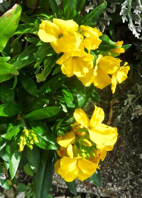 Wallflowers 1
