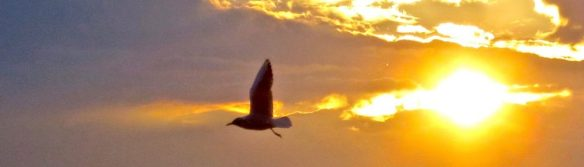 cropped-gull-at-sunset-29-4-14.jpg