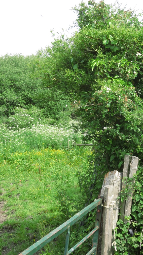Field and hedgerow 2