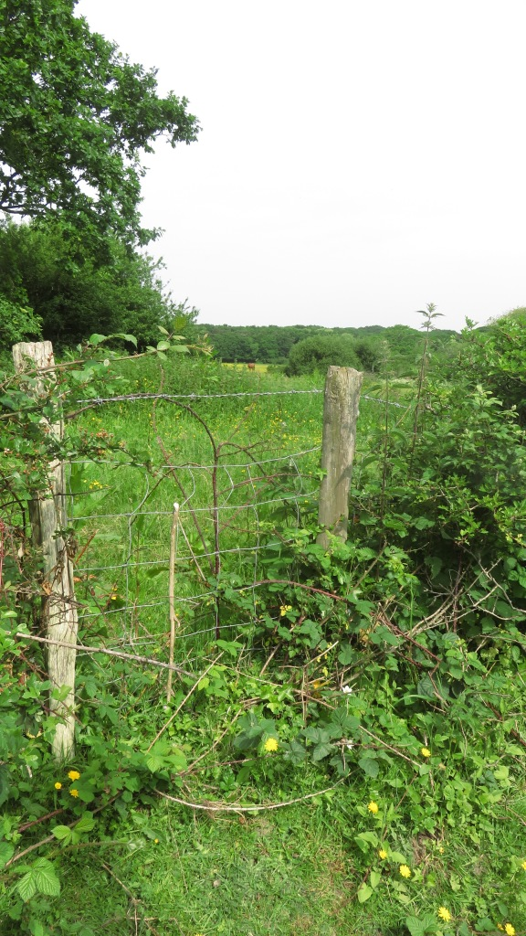 Field and hedgerow 1