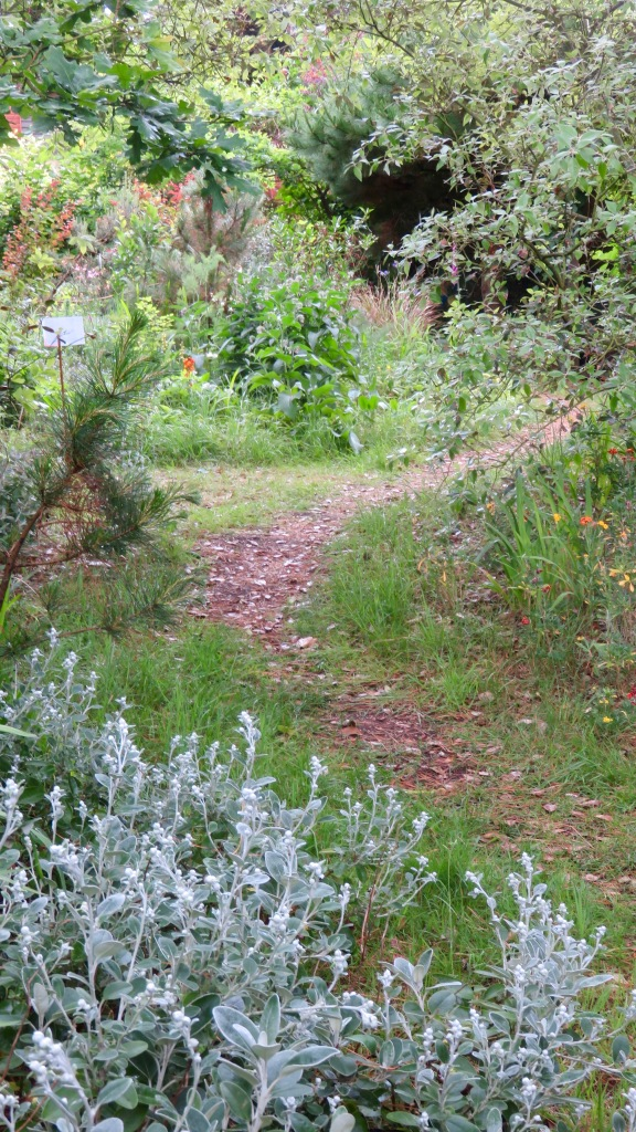 Giles's garden 3