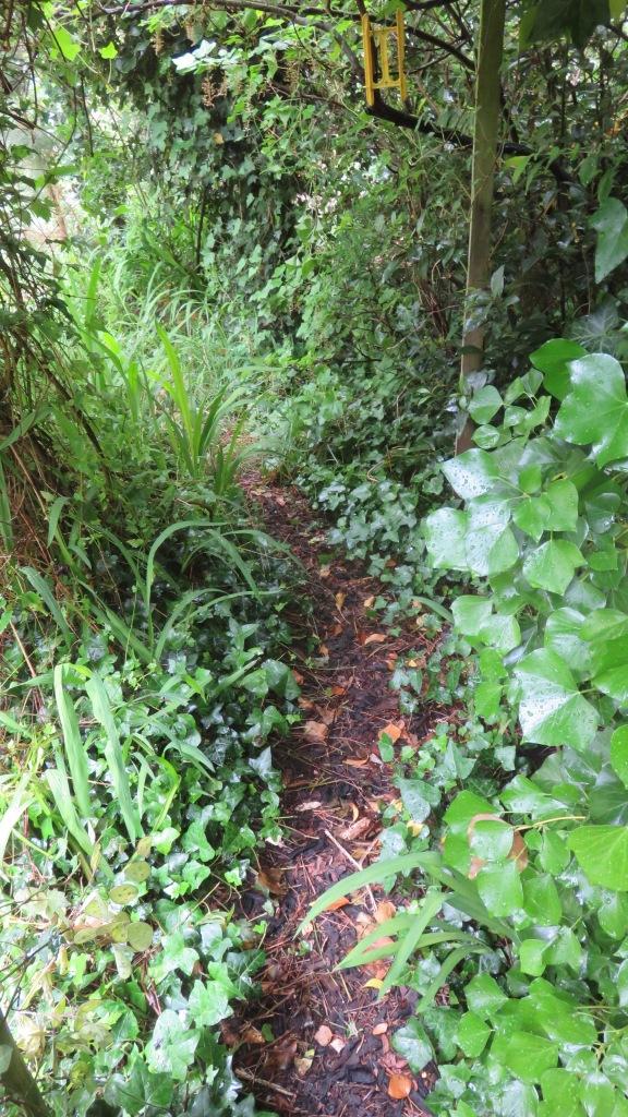 Giles's garden 5