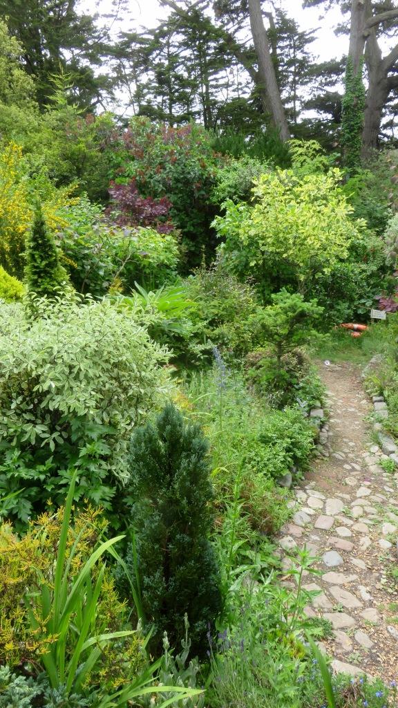 Giles's garden 6