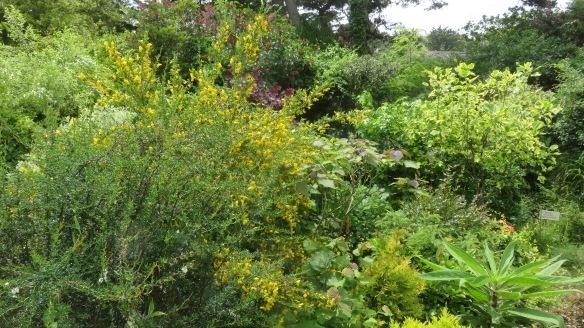 Giles's garden 7