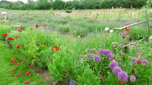 Lavender Farm 7